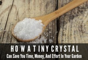 Water Absorbing Polymers | How A Tiny Crystal Can Save You Time, Money, and Effort in Your Garden
