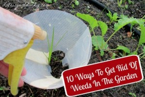 ways-to-keep-weeds-out-of-the-garden