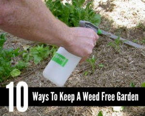 10 Ways To Keep A Weed Free Garden