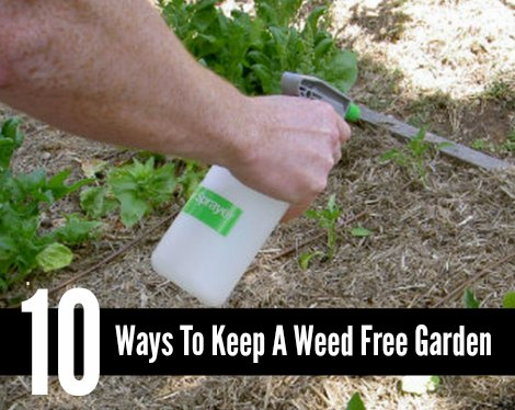 weed-free-garden