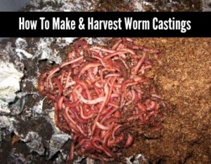 How To Make And Harvest Worm Castings