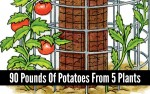 How-To: 90 Pounds Of Tomatoes From 5 Plants