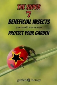 7 Beneficial Insects To Protect Your Garden