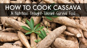 How To Cook Cassava: A Nutritious, Drought-Tolerant Survival Food