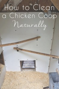 clean-a-chicken-coop-naturally