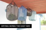 How To: Drying Herbs The Easy Way