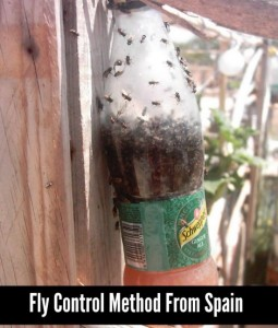 Fly Control Method From Spain