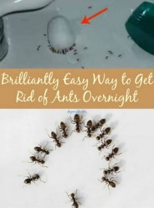 Brilliant Way To Get Rid Of Ants Overnight