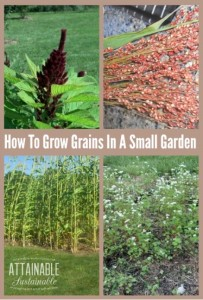 How To Grow Grains In A Small Garden
