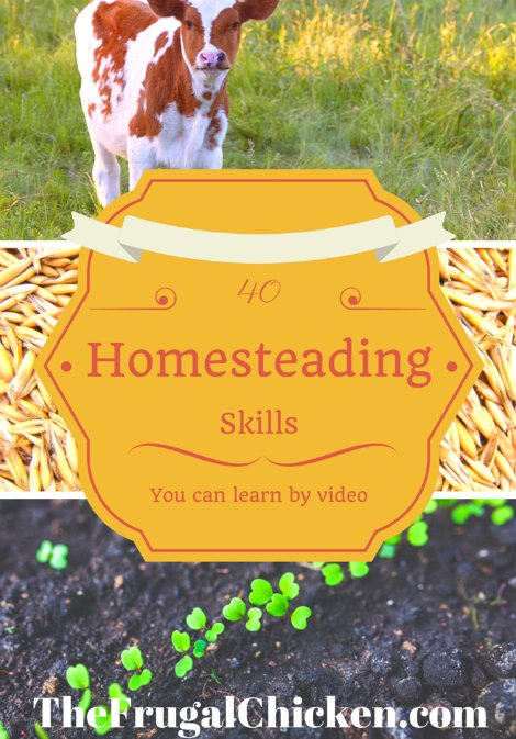 homestead-skills-you-can-learn