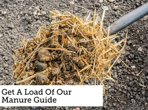 Essential Manure Guide For Gardening