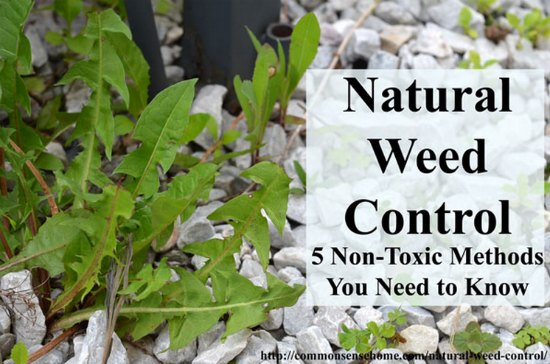 non toxic weed control methods