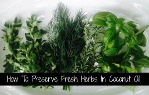 preserve-fresh-herbs-in-coconut-oil