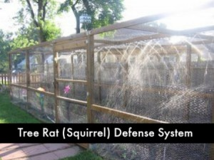 DIY Advanced Tree Rat Defense System