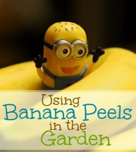 How-To: Using Banana Peels In The Garden