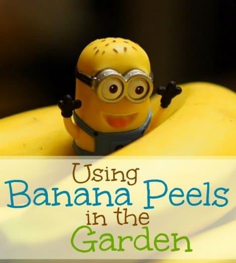 using-banana-peels-in-the-garden