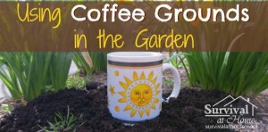 using-coffee-grounds-in-the-garden