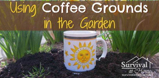 How to using coffee grounds in the garden for How to use coffee grounds in garden