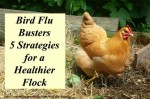 Bird Flu Busters: 5 Strategies For A Healthier Flock