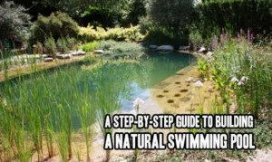 Step-By-Step Guide To Building A Natural Swimming Pool