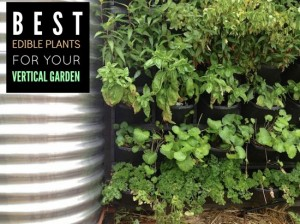Best Edible Plants For Your Vertical Garden