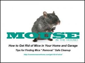 get-rid-of-mice