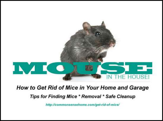 How To Get Rid Of Mice In Your Home And Garage