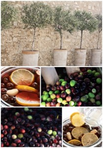 How To Grow An Olive Tree In A Container + How To Cure Olives
