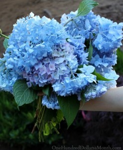 Guide: How To Change The Color Of Hydrangea Plants