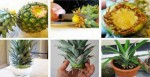 How To Grow A Pineapple From Another One