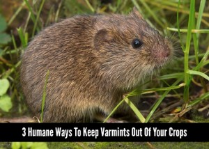 3 Humane Ways To Keep Varmints Out Of Your Crops