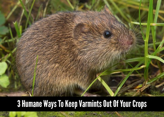 humane-ways-to-keep-varmints-out-of-your-crops