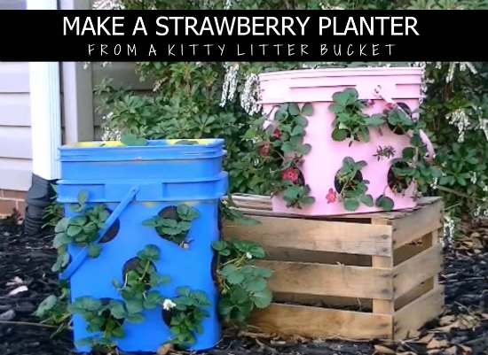 make-a-strawberry-planter-from-a-kitty-litter-bucket