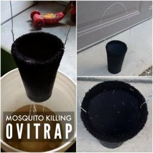 DIY Mosquito Killing Ovitrap