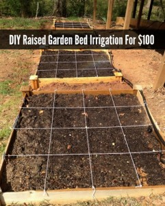 DIY Raised Garden Bed Irrigation For $100
