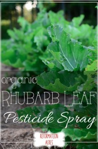 Organic Rhubarb Leaf Pesticide Spray
