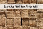 Straw vs Hay – Which Makes A Better Mulch?