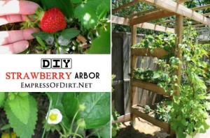 How To Make A Strawberry Arbor