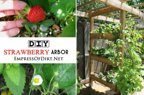 strawberry-arbor