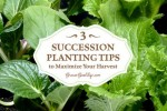 Succession Planting Tips To Maximize Your Harvest