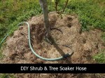 DIY Shrub And Tree Soaker Hose