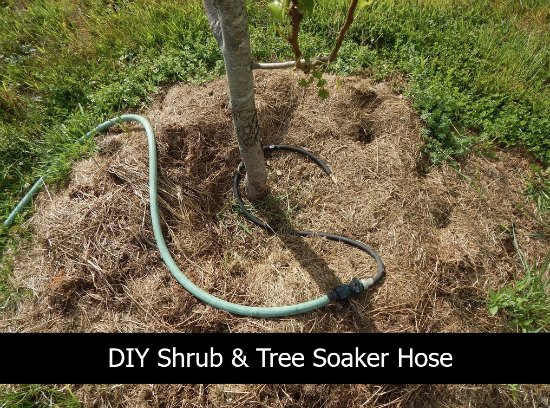 tree-soaker-hose