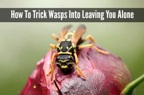 trick-wasps-into-leaving-you-alone