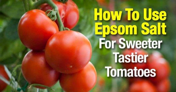 use-epsom-salt-for-sweeter-tastier-tomatoes