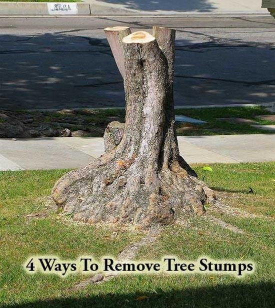 ways-to-remove-tree-stumps