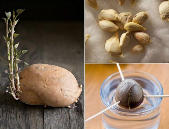 grow-gorgeous-house-plants-from-fruit-and-veg-scraps