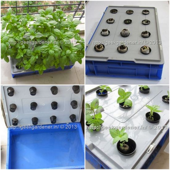grow-herbs-in-a-hydroponic-raft-system