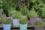 11 Useful Herbs You Can Grow In Containers