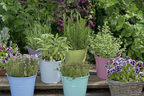 herbs-you-can-grow-in-containers