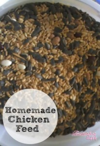 homemade-chicken-feed